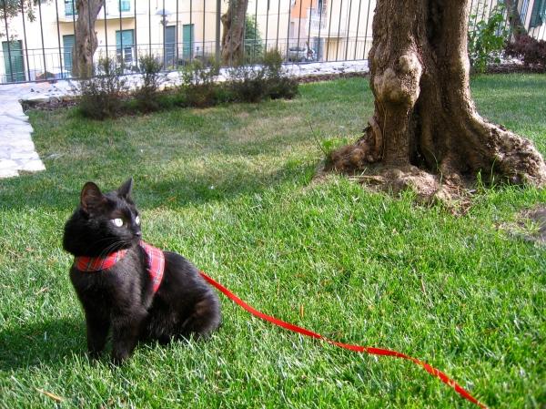 Kiwi ponders the park