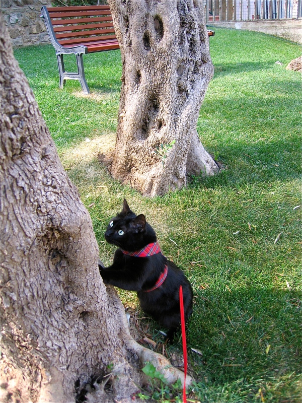 Kiwi inspects olive tree