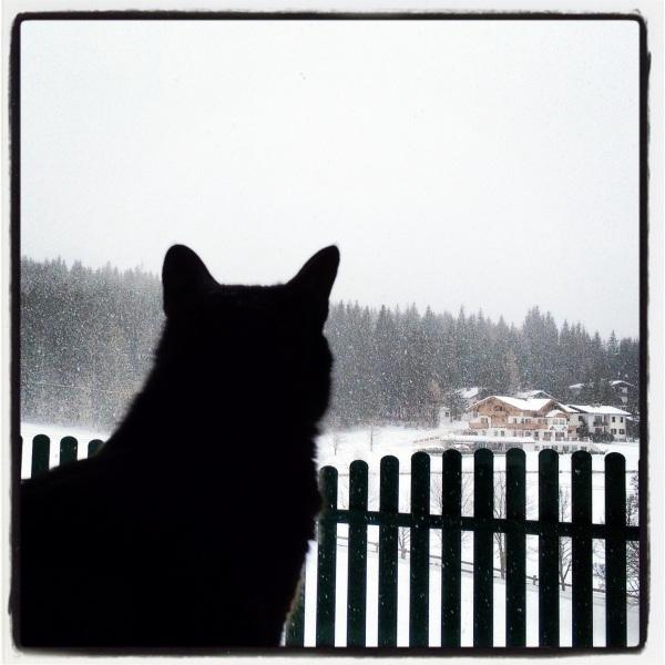 Kiwi & Schnee!