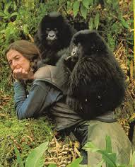 Fossey