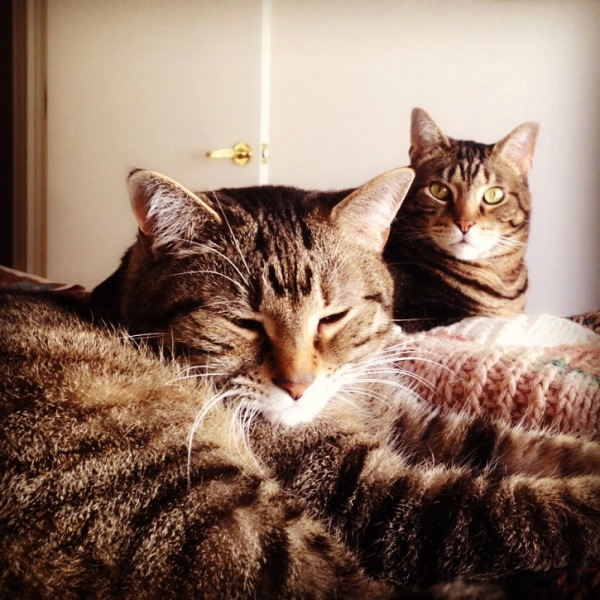 Desert Cats (Bella & Bogart)